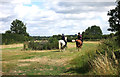 SP6508 : Horses on the Jubilee Way by Des Blenkinsopp