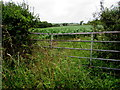 SR9798 : Overgrown area around a field gate near Furzton Wood by Jaggery