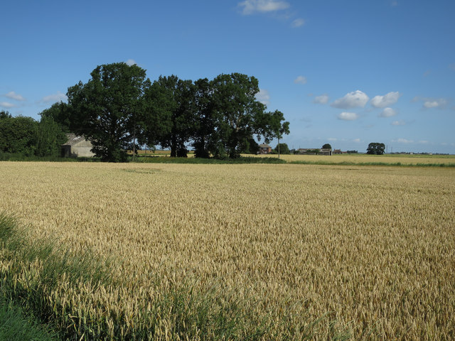 Wheat field by White City Road