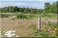 SU9666 : Footpath, Chobham Common by Alan Hunt