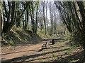 SE3948 : Harland Way on Quarry Hill by Derek Harper