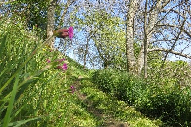 Path beside the Tyne