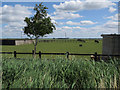 TF5606 : Horse paddocks by Townsend Farm by Hugh Venables