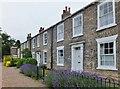 TA0239 : Willow Grove, Beverley, Yorkshire by Bernard Sharp