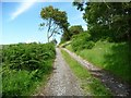 SN6586 : Gated hillside track, western side of Mynydd Gorddu by Christine Johnstone