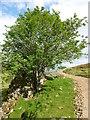 NJ3320 : Old limekiln, Ryntaing by Alan O'Dowd
