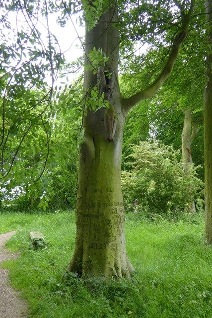Footpath in Crow Wood, Burton Agnes Hall