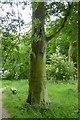 TA1063 : Footpath in Crow Wood, Burton Agnes Hall by David Smith