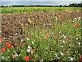 SO8646 : Vergeside wildflowers by Philip Halling