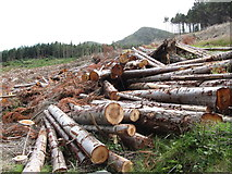 J3630 : Clear felled section of Donard Wood on the slopes of Drinnahilly by Eric Jones