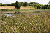 SO8843 : Wildflowers beside Croome River by Philip Halling