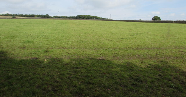 Large field on the north side of School Wood, Catbrook