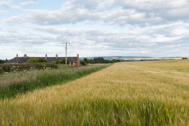 Fields and houses near Cauldcots Farm