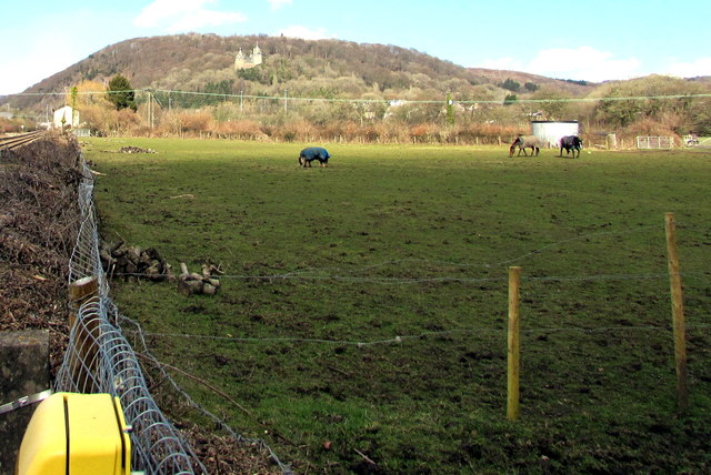 Horses in a field between Morganstown and Tongwynlais
