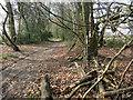 SU7987 : Woodland Path by Des Blenkinsopp