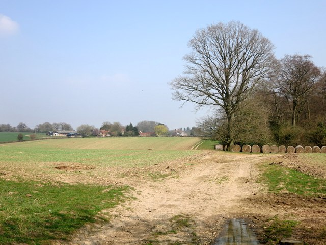 Corner of Harcham's Wood