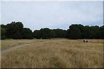 TQ2372 : Putney Heath by DS Pugh