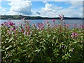 NS3874 : Himalayan Balsam by Lairich Rig