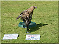 SE8382 : Tawny Eagle, Thornton-le-Dale Show , Yorkshire by Christine Matthews
