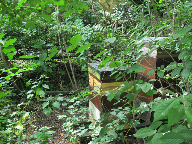 Hollybush Conservation Centre: beehives
