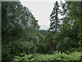 SE8790 : Walk to Bridestones, Dalby Forest, Yorkshire by Christine Matthews