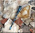 TG4319 : Common Blue Damselfly (Enallagma cyathigerum) by Evelyn Simak