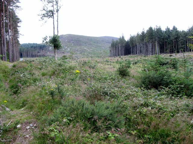 Clear felled forest land  on the south-eastern slopes of Drinnahilly