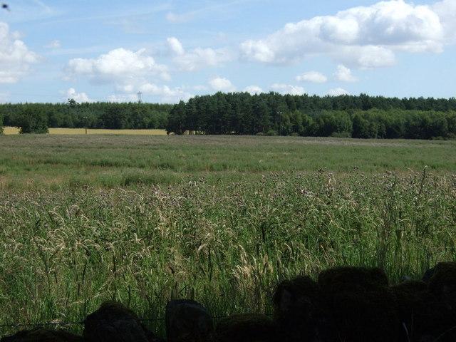 Farmland towards Shildonhill Plantation