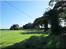 SJ8970 : Field near Gawsworth by David Weston
