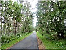 NZ0255 : Entrance Drive, Ministeracres by Robert Graham