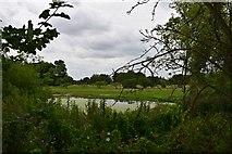 TQ1776 : Marshy Pond by John Myers