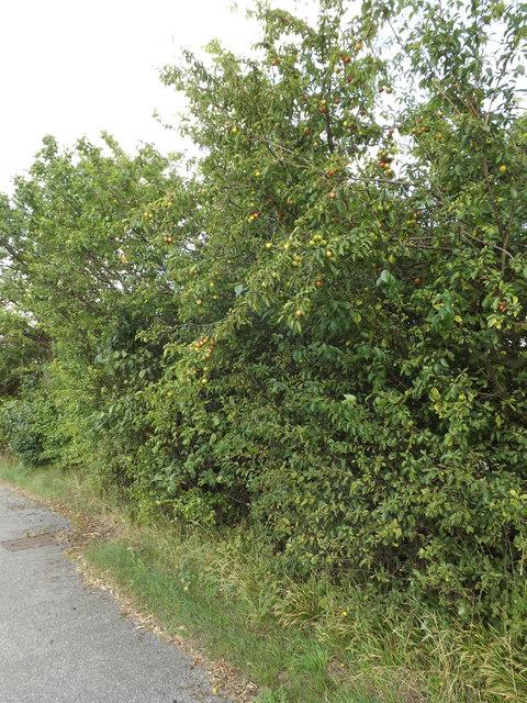 Plum Bush off the A12 Main Road