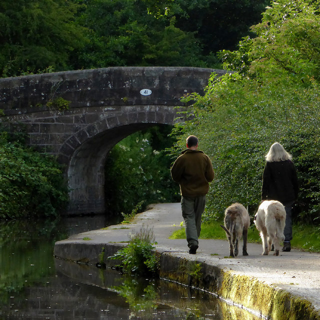 Walking the dogs near Cheddleton, Staffordshire