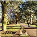 SP3277 : Walking between cedars, War Memorial Park, Coventry by Robin Stott