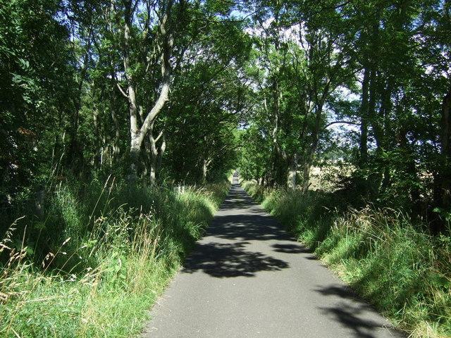 Minor road heading north west beside Black Plantation