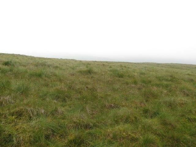 Grassland on Old Cote Little Moor