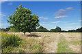 SU9961 : The Bourne Meadows by Alan Hunt