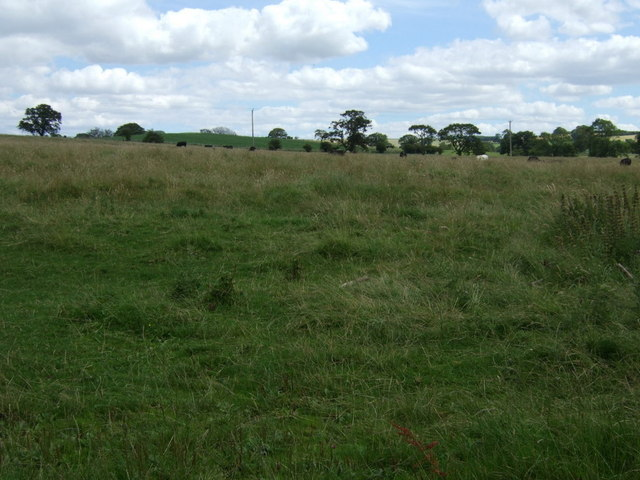 Grazing south of Hallington