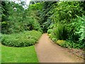 TF6929 : Path in Woodland Walk, Sandringham Estate by David Dixon