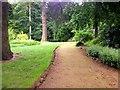TF6929 : Sandringham Estate, Woodland Walk by David Dixon