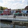SJ9097 : Narrowboat guard dog by Gerald England