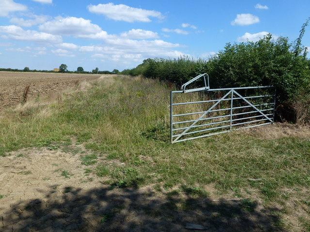Field margin and farmland near Elton