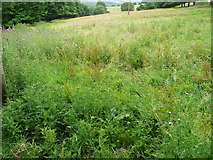 SE0322 : Wet and prickly patch on Sowerby Bridge FP141, Link F by Humphrey Bolton