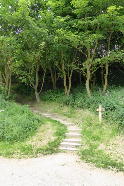 Footpath in Horn Dale, Filey Country Park