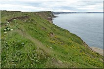 TA1281 : The coast at North Cliff, Filey by David Smith
