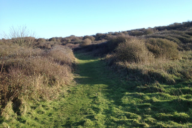 Thorn scrub on the northern slopes of Seaford Head