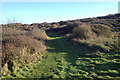 TV4998 : Thorn scrub on the northern slopes of Seaford Head by Robin Stott