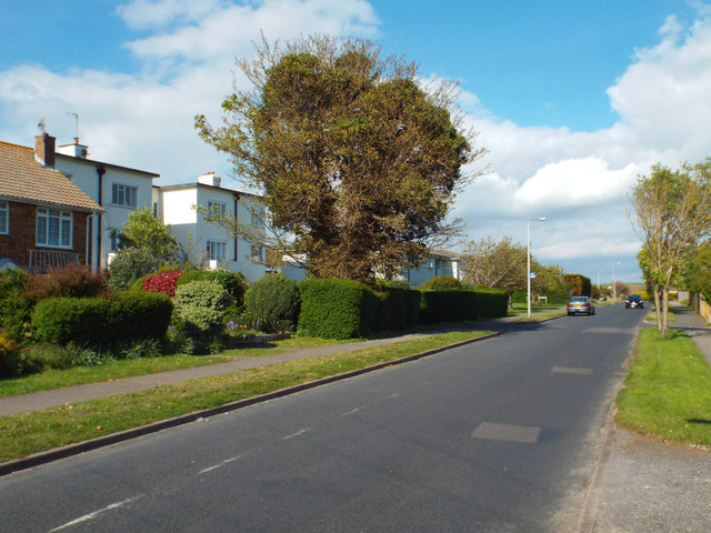 Clipped hedge and sickly tree, Upper Belgrave Road, Seaford