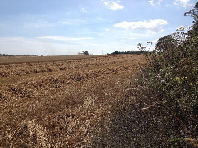 Harvesting, south of Beccles