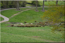 TQ5940 : Boggy hollow, Grosvenor Park by N Chadwick